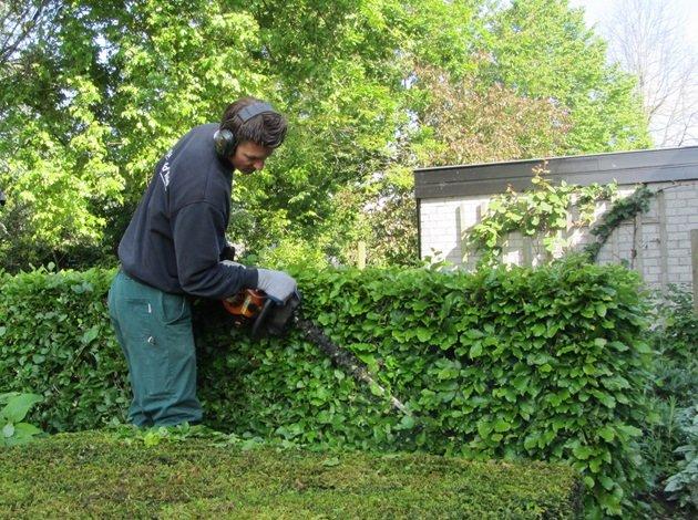 Uw tuin zomerklaar maken van jaarsveld tuinen for Tuin snoeien