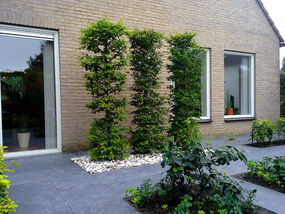Moderne achtertuin met rechte lijnen van jaarsveld tuinen for Aanleg kleine tuin